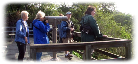 Birders in the field.